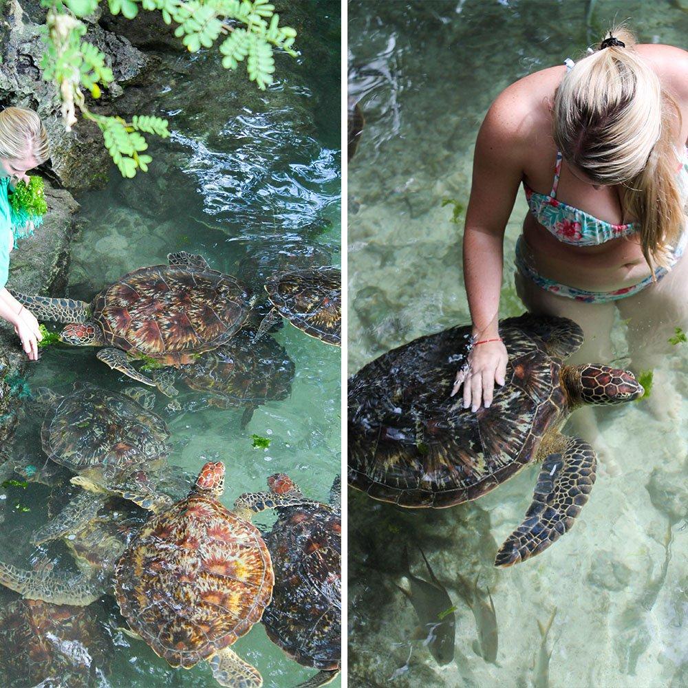 turtles4_zanzibar